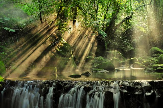 光と水面のある森林