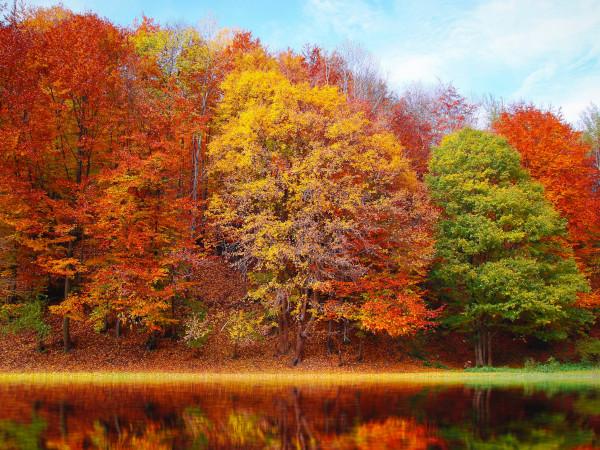 紅葉の森林景観