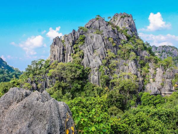 緑の木々と山の光景
