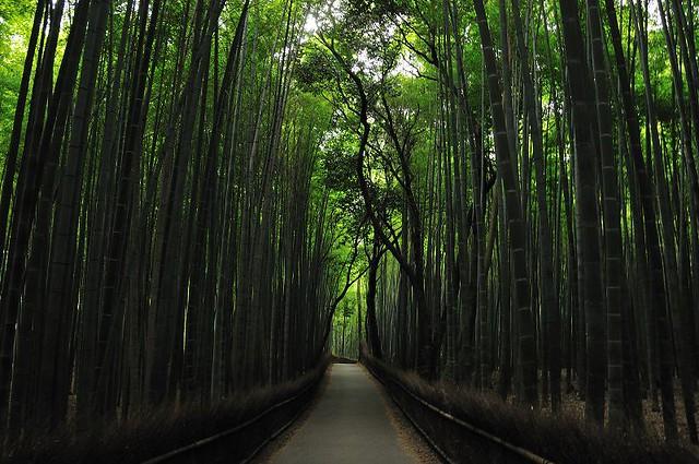 竹林小路空間