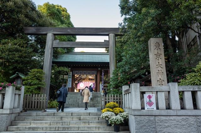 東京大神宮の御神木「椎の木」